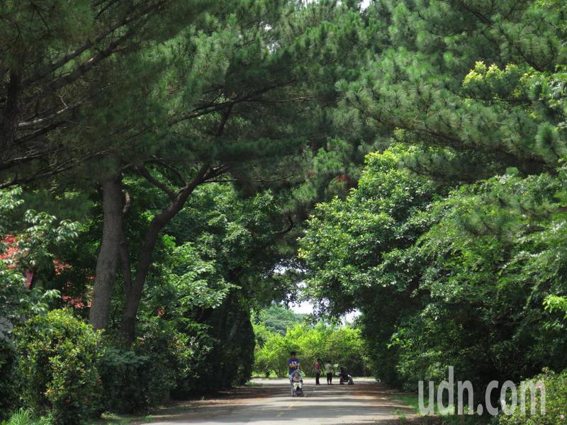 前身為保一總隊大湳營區的桃園八德大湳森林公園占地近17公頃,園區保留豐富動植物生態,市府即起封園著手改造。記者張裕珍/攝影