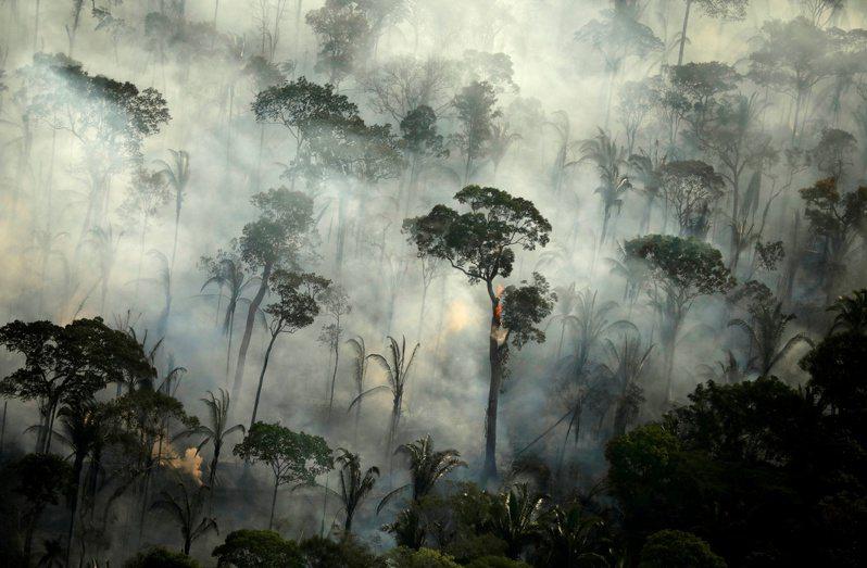 巴西國家太空署今天發布的數據顯示,巴西亞馬遜雨林砍伐5月持續惡化,創下歷年5月和歷年首5個月最嚴重的紀錄。 路透社