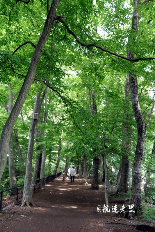 軌道旁一處槐樹參道,這些老樹都有好幾百年的歷史, 這樣一處有懷古幽情的小道, 居然在離車站不過五分鐘的腳程。