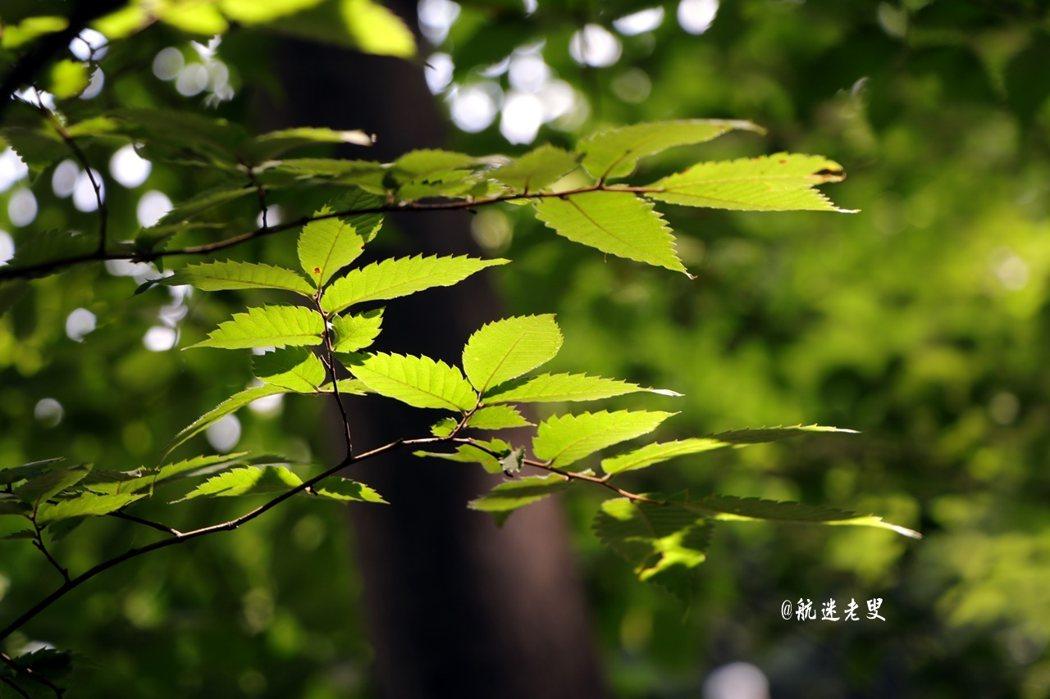 陽光溫柔,樹影婆沙, 醞釀出幽靜的空間。