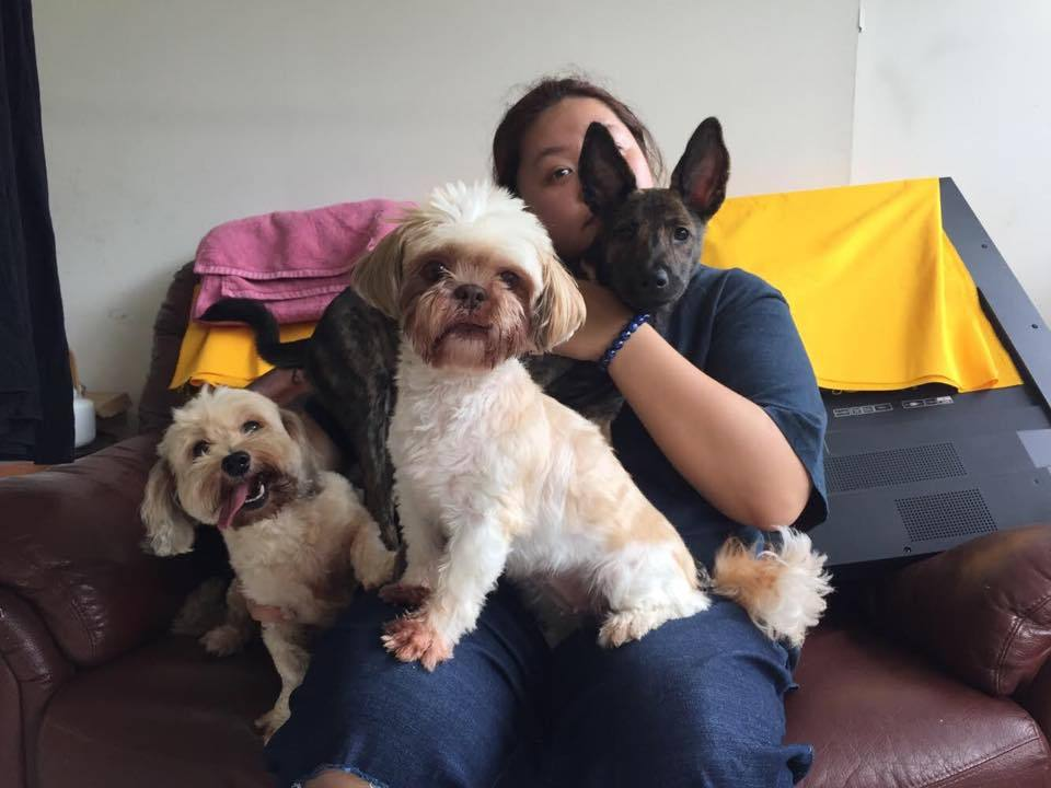 蔡嘉茵和她的愛犬們。圖/摘自臉書