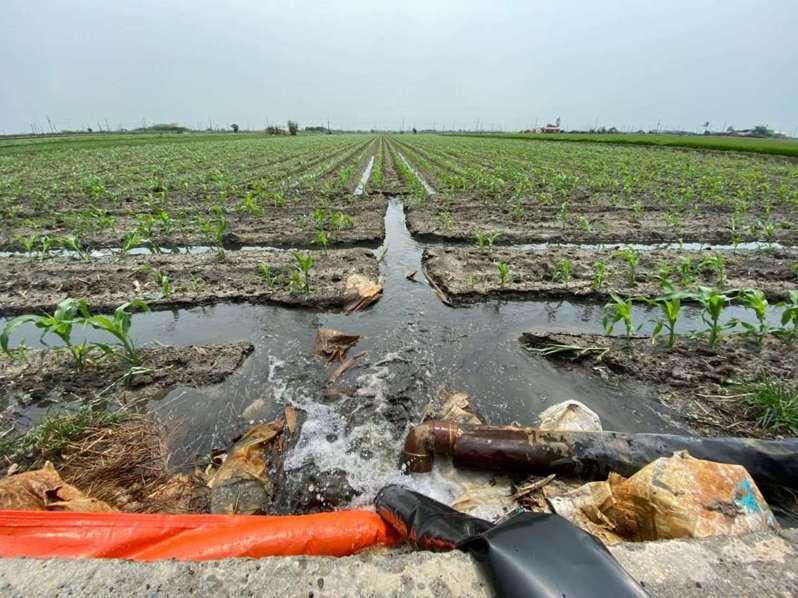 經厭氧處理過的豬糞水沼液,只需混合1:2的地下水即可施灌,施肥方便又均勻,雲林縣府大力推廣,以降低汙染。記者蔡維斌/攝影