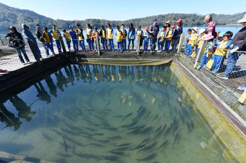 日月潭區漁會和企業合作,以當地箱網復育奇力魚,成為原生魚種的諾亞方舟。 圖/帝亞吉歐提供