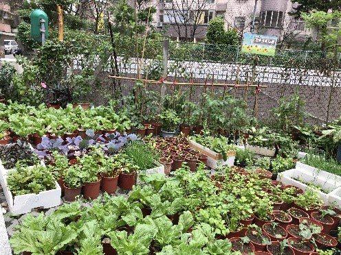 據點和里辦公室合作邀請里民及失智者共同闢建失智友善菜園。圖/雙澄照顧創新工作室提...