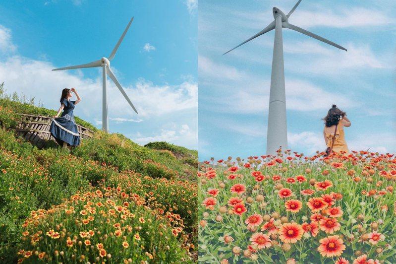 天人菊小花海配上純白風車,營造出唯美的畫面。圖/IG@haixing0527授權、IG@ping55666授權