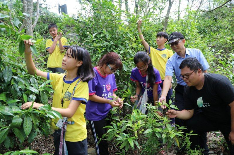 南大附小與竹橋國小學生探索台灣原生種山茶,並學習茶的製作。圖/南大附小彩虹斑馬志工隊提供