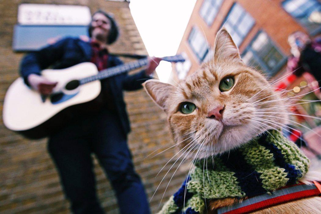 2012年,在街頭表演的James Bowen以及街貓BOB。 圖/路透社