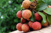 吃荔枝會引發低血糖症?當心這樣吃恐致命!鳳梨、芒果也都在危險榜上