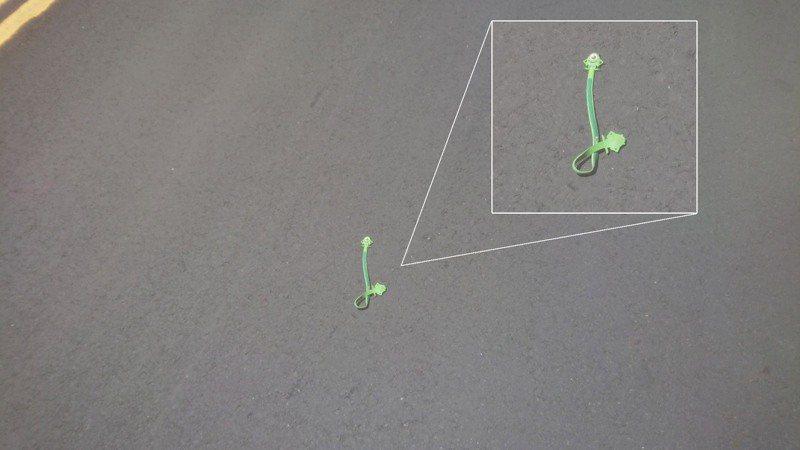 巡山員以為路上有隻青蛇被路殺,但靠近一看卻是一條「大眼仔」讓他哭笑不得。圖擷自陽明山國家公園粉專