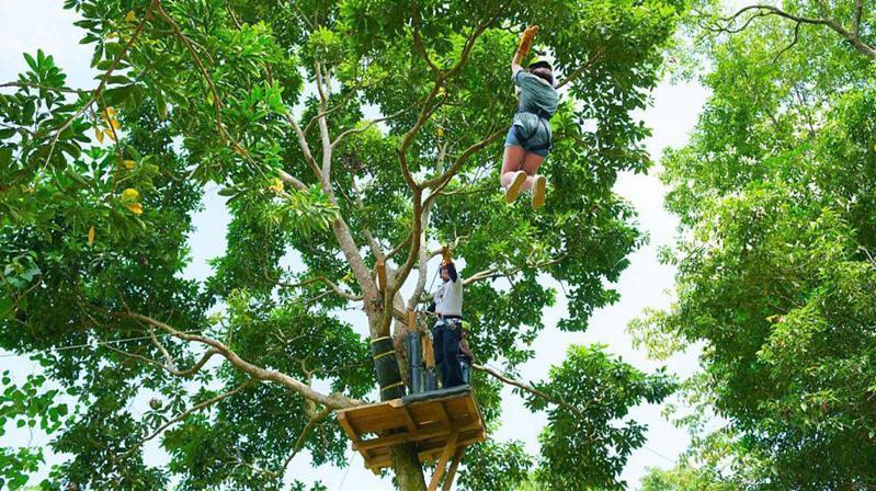 ▲暑假親子旅遊活動推薦-花蓮森林探索。(圖/Tripbaa趣吧!達人帶路)