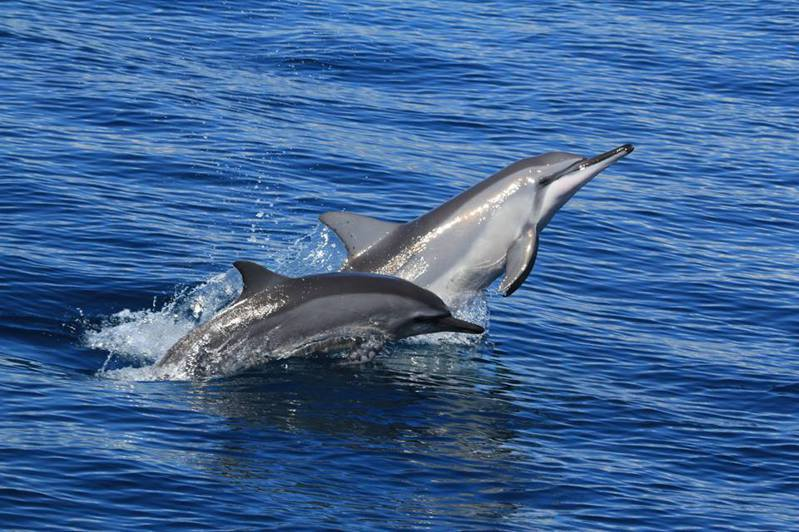 ▲暑假親子旅遊活動推薦-花蓮賞鯨豚。(圖/Tripbaa趣吧!亞洲自由行專家)