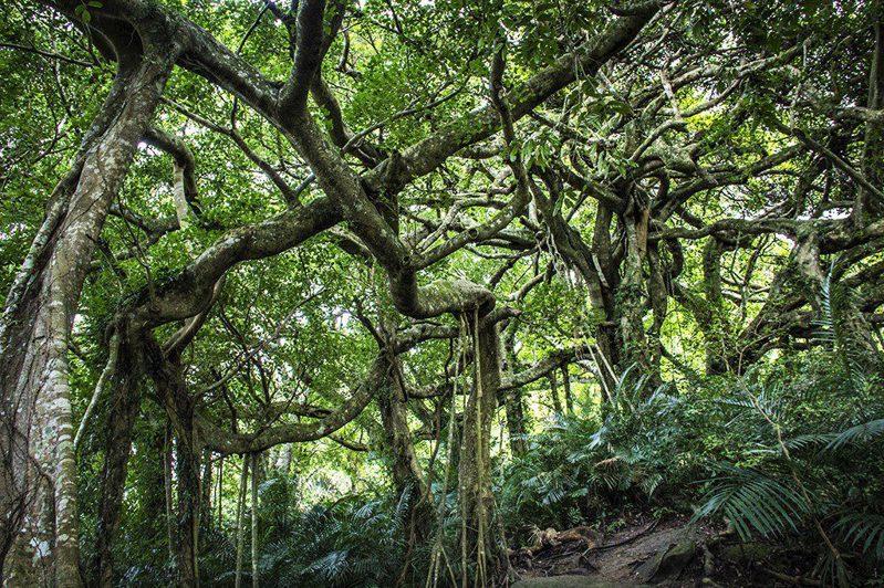 ▲暑假親子旅遊活動推薦-台東鸞山森林。(圖/Tripbaa趣吧!亞洲自由行專家)