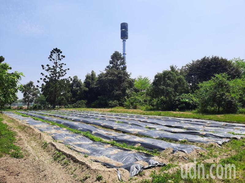 嘉義大學民雄校區興建的基地台與民雄農工僅一牆之隔。記者陳玫伶/攝影