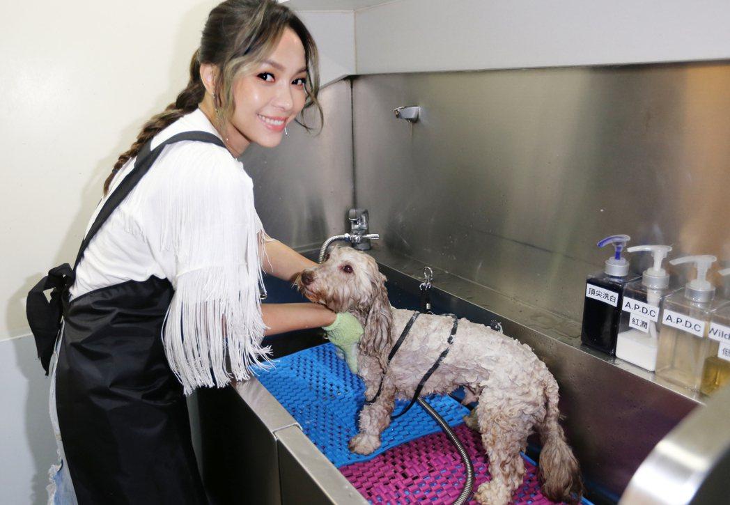 林采欣(左)幫愛犬沙寶洗澡。記者曾學仁/攝影