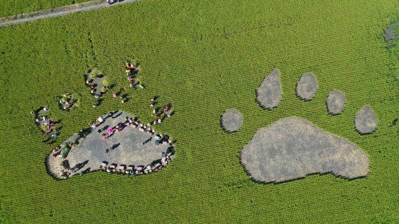 兩隻台灣黑熊腳掌,一個足足有10公尺這麼大。(圖片:可樂旅遊提供)