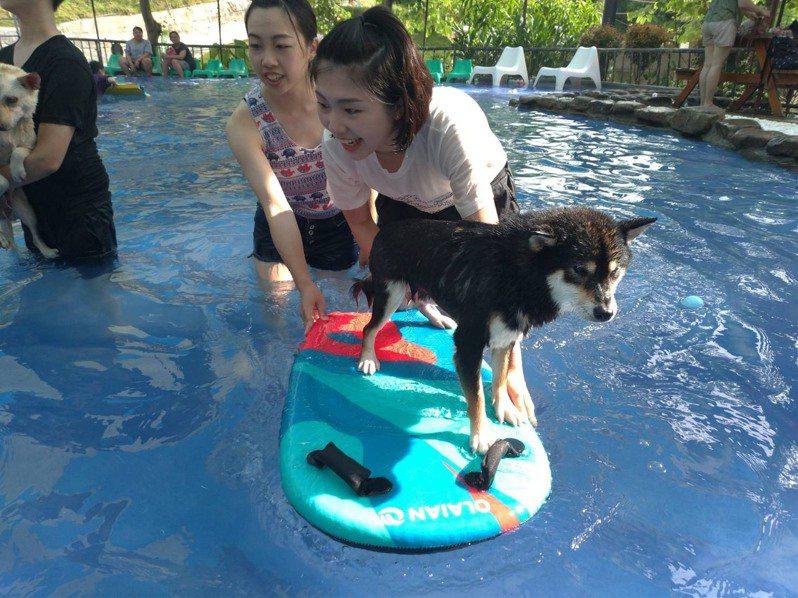 台南關廟森呼吸寵物農場擁有開放式的戲水區。圖/台南市觀光旅遊局提供