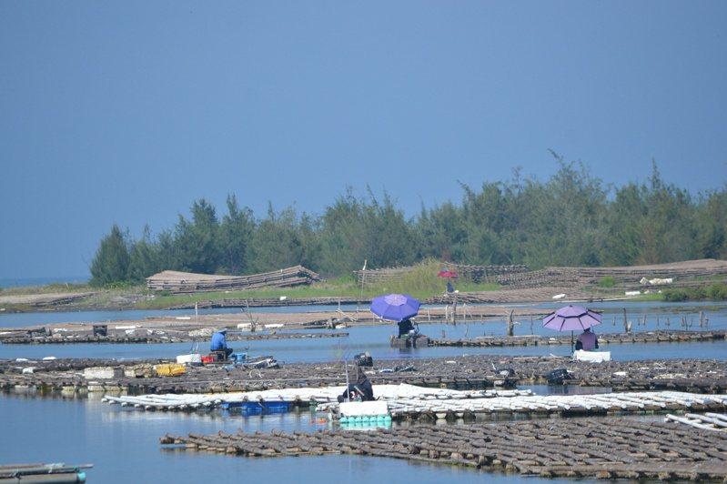 蚵棚如人工魚礁,魚蝦聚集,吸引釣客垂釣。記者鄭惠仁/攝影