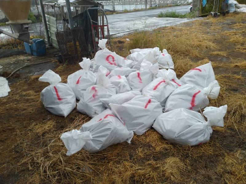 彰化縣大城鄉一土雞場確診感染H5N5亞型高病原性禽流感病毒,9556隻土雞撲殺。圖/彰化縣政府提供