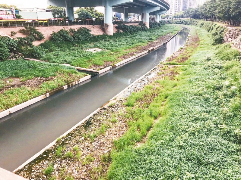 新北水利局施作「板橋區湳仔溝渠底植栽工程」,在子溝兩側種植植栽。 記者王敏旭/攝影