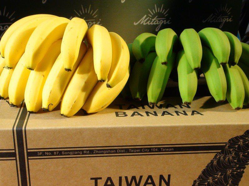 雲林縣莿桐果菜生產合作社理事主席蘇明利以市面上少見的「烏龍」黃金蕉,成功復興外銷日本市場。 圖/聯合報系資料照片