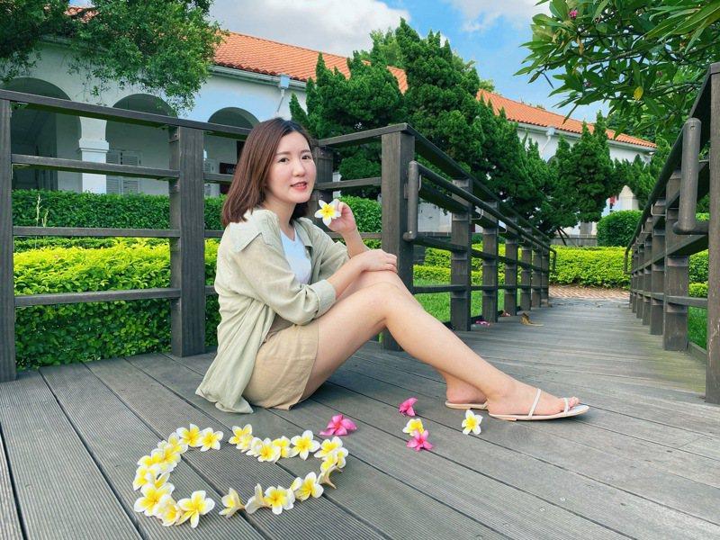 淡水小白宮前院的雞蛋花逐漸盛開,成為打卡拍照熱點。記者吳亮賢/攝影