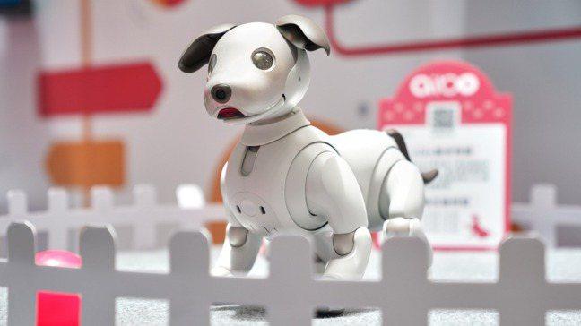 超萌的「aibo AI機器狗」2019年在台亮相。 圖/Sony提供