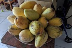 一句「想吃芒果」鑄下大錯 媽媽爆買讓他下次不敢亂說話了