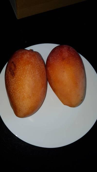 一對4歲與2歲的小兄弟因愛吃芒果,近日兩人臉上竟冒出許多小紅痘,經醫師檢查,發現兩人的症狀為「接觸性的過敏反應」與「毛囊炎」。記者王駿杰/攝影