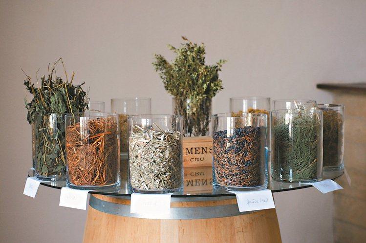 自然動力法的製劑主要為蓍草、春日菊等發酵轉化而成。圖/林裕森