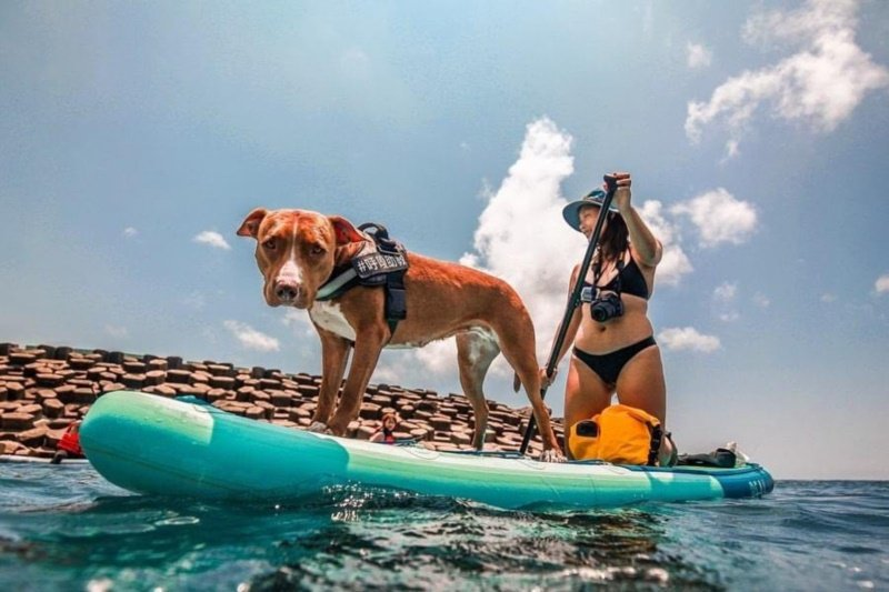 遊客可選擇難度較低的立式划槳來體驗海洋休閒運動。 圖/讀者提供