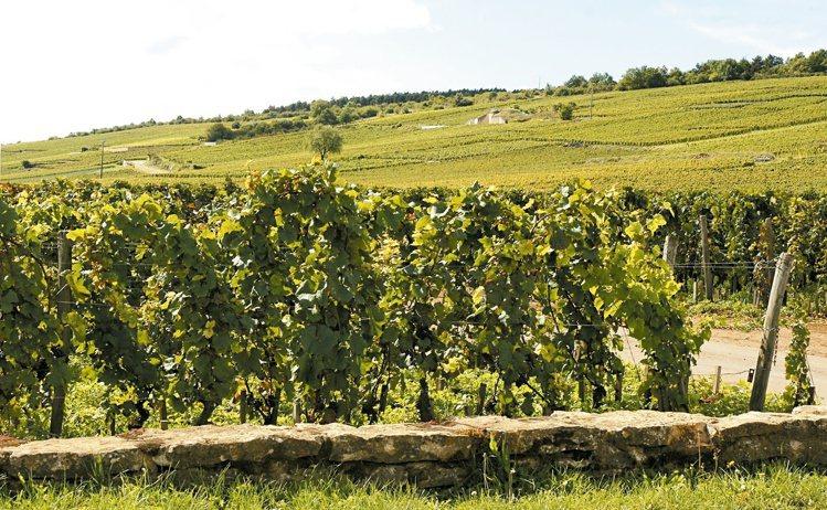 強調本土酵母的使用,更能突顯葡萄酒天然風土面貌。圖/林裕森提供 ※ 提醒您:禁...