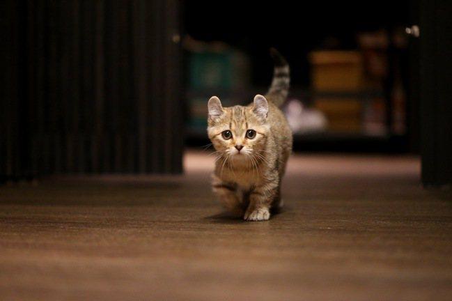 名為「Chandon」的超親人店貓,是Bar Weekend的隱藏版亮點。記者余...