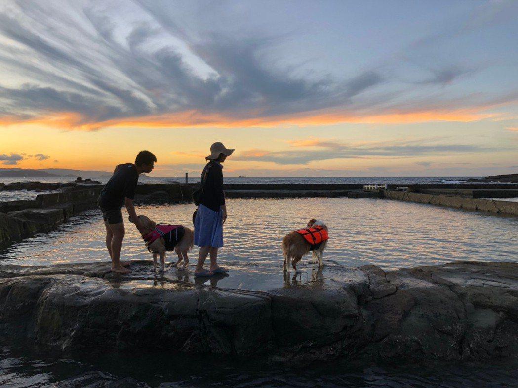 對愛狗族而言,最棒的是和平島公園區內有友善寵物海水池。圖/觀光局提供
