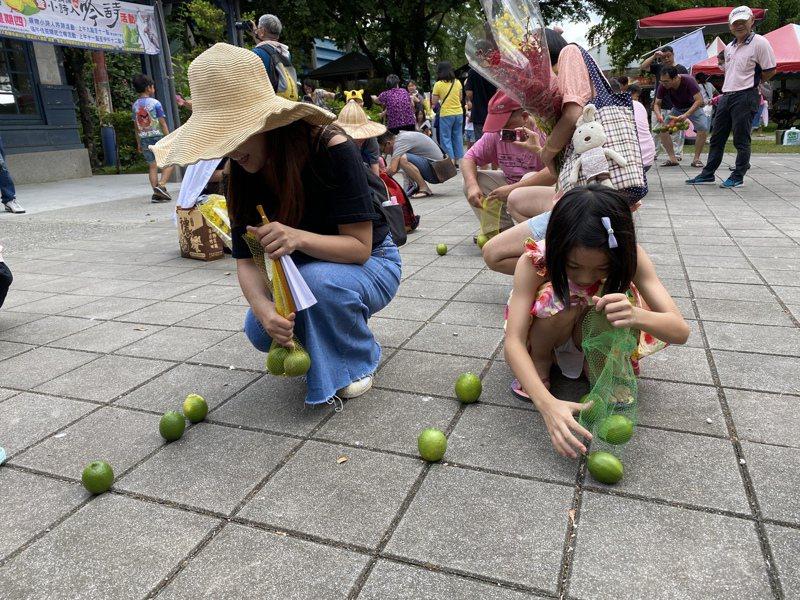 屏東檸檬產地價格低迷,竹田鄉公所昨端午節不立蛋,而是「立檸檬」,希望提升買氣。記者劉星君/攝影