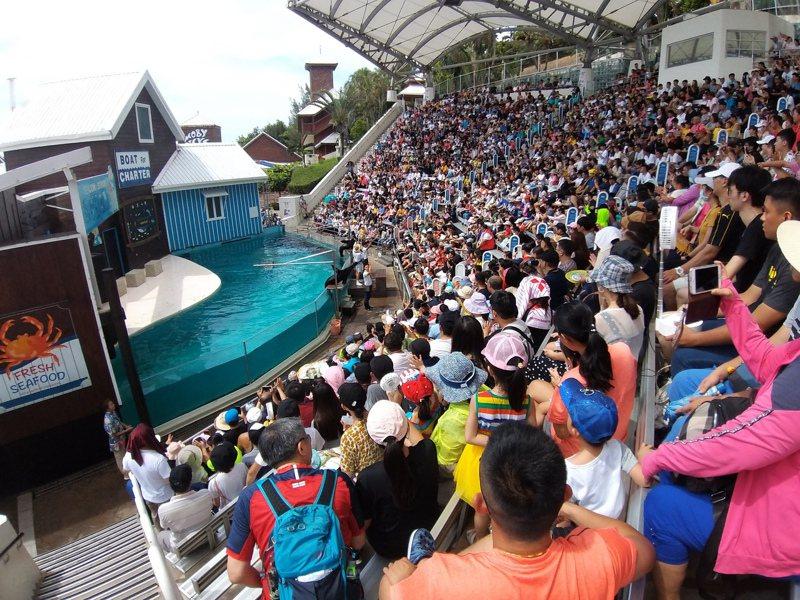 花蓮遠雄海洋公園今天上午超過6千人入園。圖/遠雄海洋公園提供