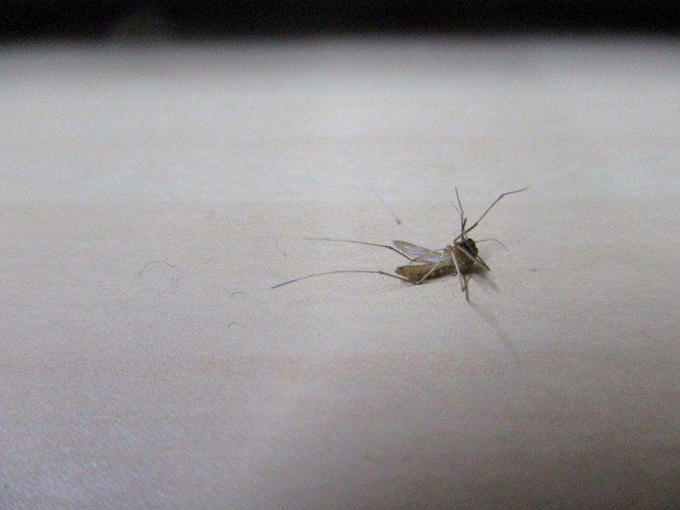 夏日蚊蟲惱人。圖/半懶提供