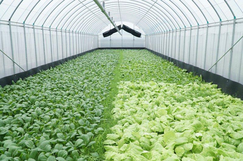 農友獲溫室補助計畫改善設備,可有效穩定市場供應。圖/縣府提供