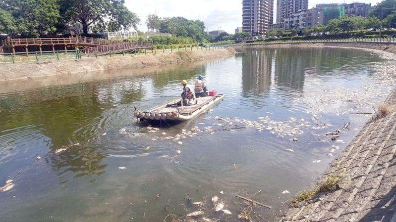 高雄後勁溪端午連假出現大量魚屍,初步研判是天氣太熱,導致水中溶氧量不足,致魚群死亡,總重量約十萬噸。圖/高雄市水利局提供