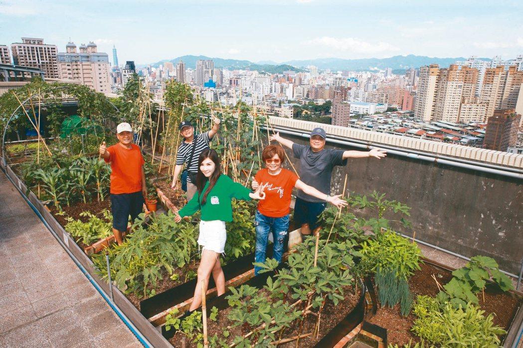新北市政府近年力推「清涼屋頂」計畫,永和菠爾社區開辦屋頂農場,架設太陽能板發電供...