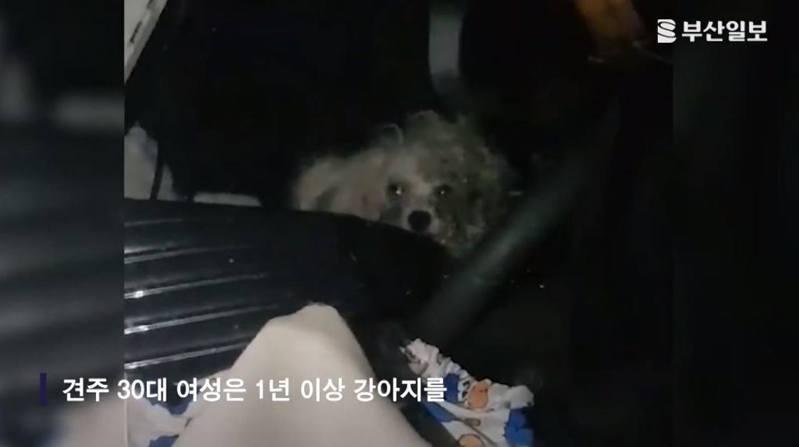 在韓國現行法律下,小狗屬於「私有財產」,故將「私有財產」放在車上未屬違法。釜山海雲台警方目前只能以涉嫌違反《動物保護法》處理案件。圖/YouTube