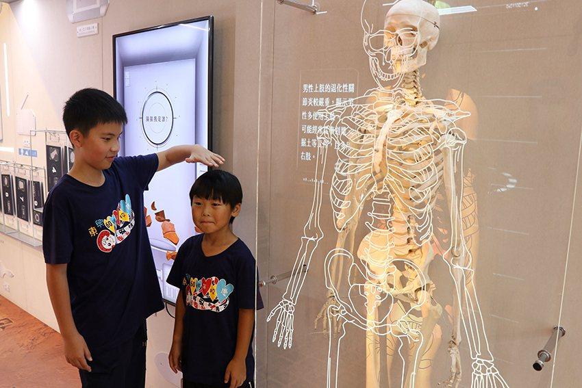 透過人骨模型及動畫投影,了解史前人類健康狀況。 十三行博物館/提供