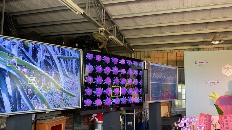 运用科技,农场内也有设置「战情室」了解火龙果的生长情况。 记者刘星君/摄影