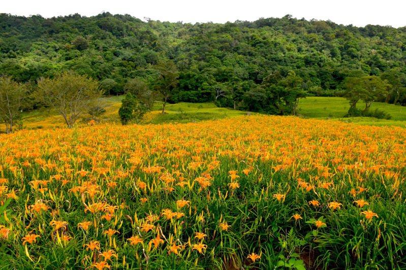 每年8月開始是花蓮赤科山金針花季,水保局推出農村體驗遊程,用振興券、農遊券即可享8折優惠。圖/資料照