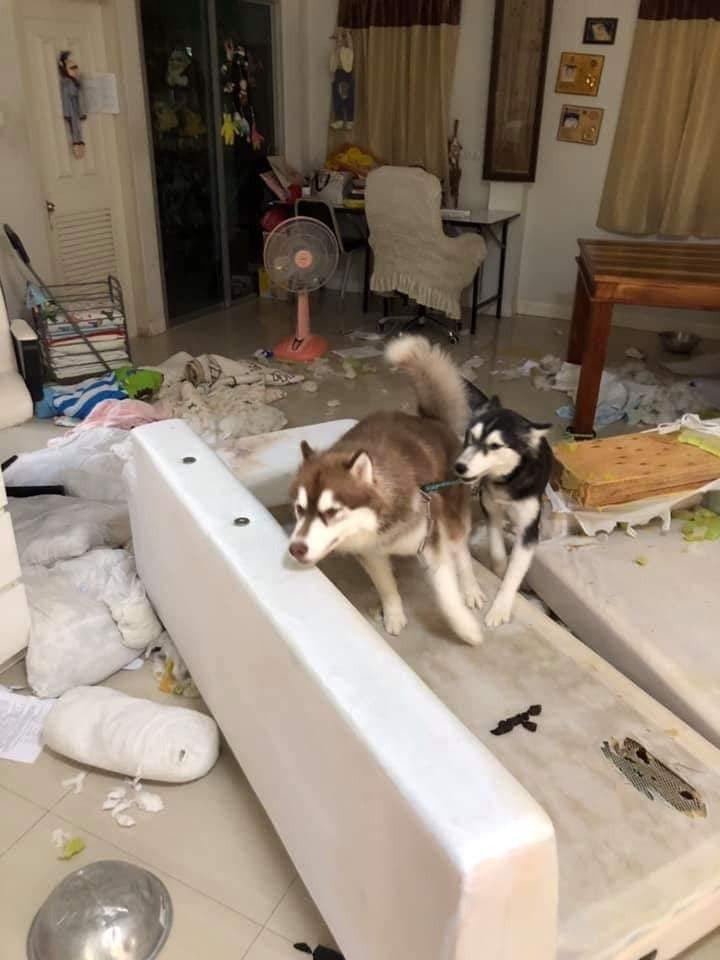 相中可見,樓主家中變得混亂不堪,整個地下都是垃圾之餘,沙發被拆掉、櫃子的東西全被翻出來。圖擷自facebook