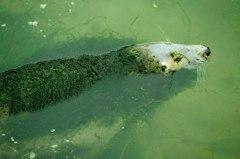 海豹長滿青苔像「死了?」 惹怒2.6萬人連署關閉動物園