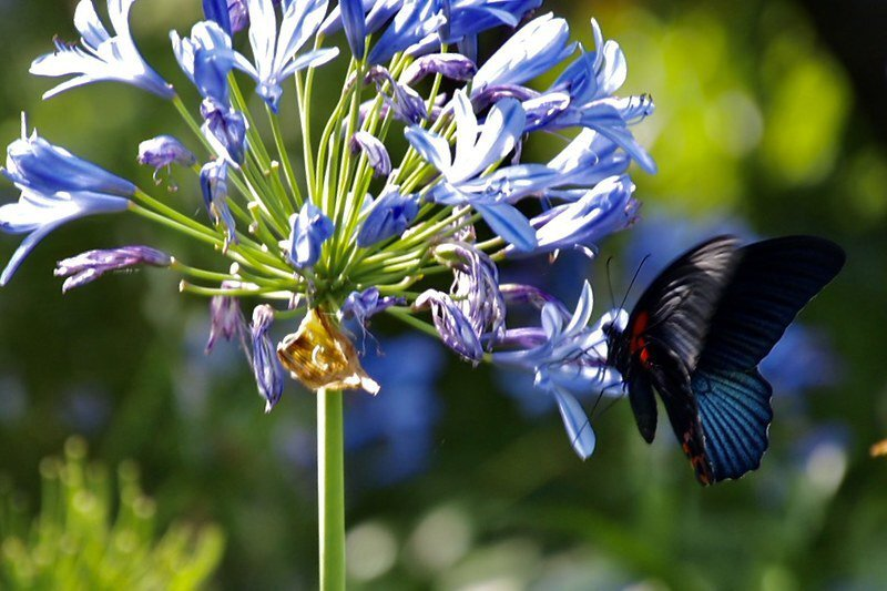 蝴蝶蜜蜂更是滿園滿山飛