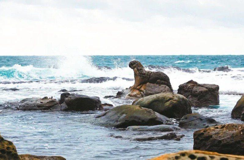 基隆鳥會在2018年依法向市政府提報海豹岩為具有「特殊地形及地質現象的自然紀念物」。圖/基隆鳥會提供