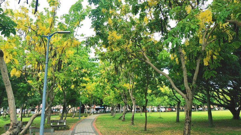 台北市美崙公園的花海廊道。圖/北市公園處提供