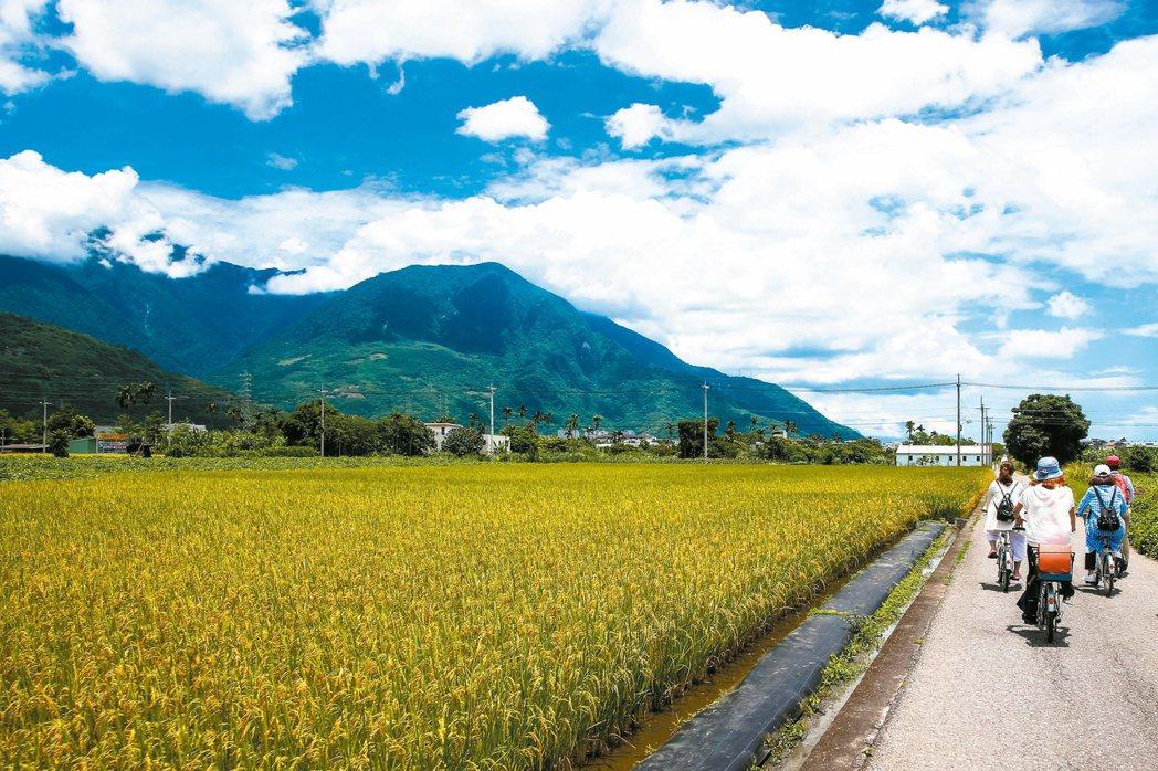 花蓮吉安鄉環鄉自行車道沿線金黃色稻浪與藍天白雲相襯,景色優美。 圖/王騰毅 攝...