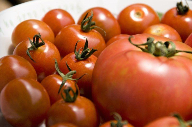 番茄是明星等級的蔬果。 圖/ingimage 提供